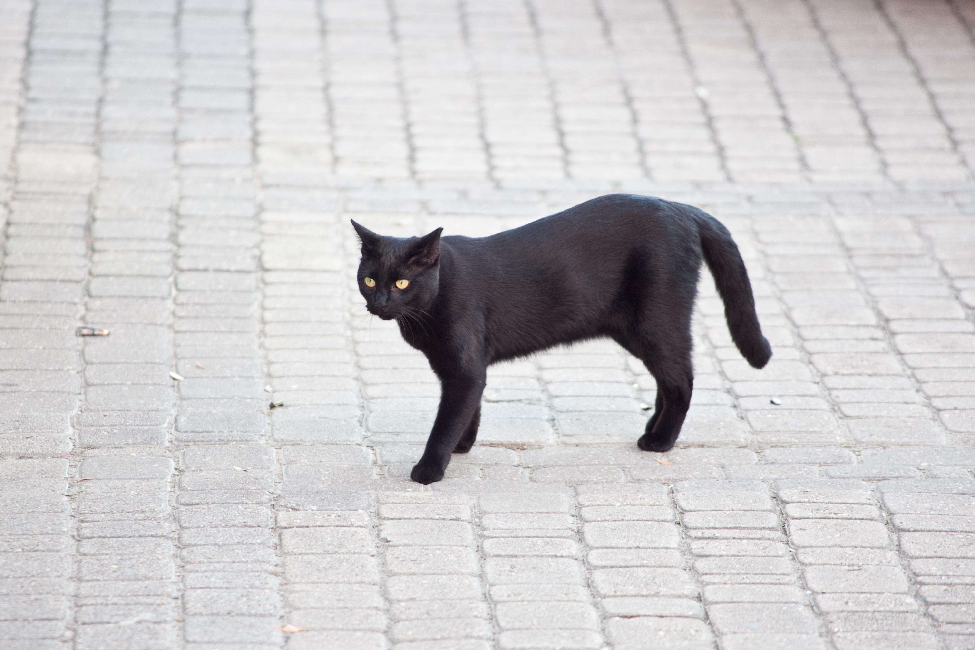 dr elsey cat litter reviews